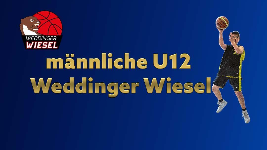mU12 Landesliga B – Weddinger Wiesel 1 vs BG Zehlendorf 3 (Basketball)